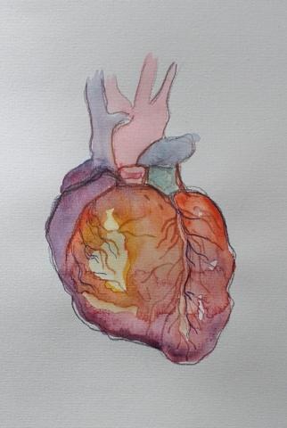 Denise Kamp drawing